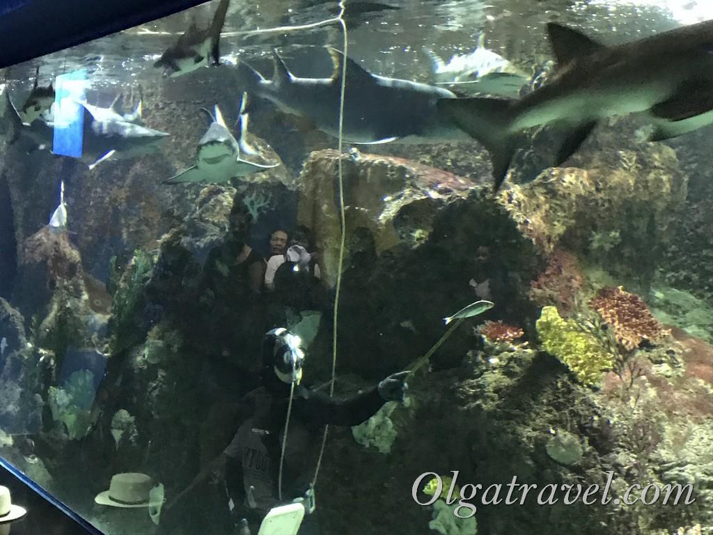 аквариум фукуок винперл