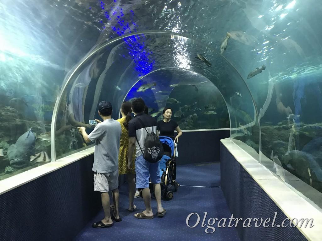 винперл аквариум