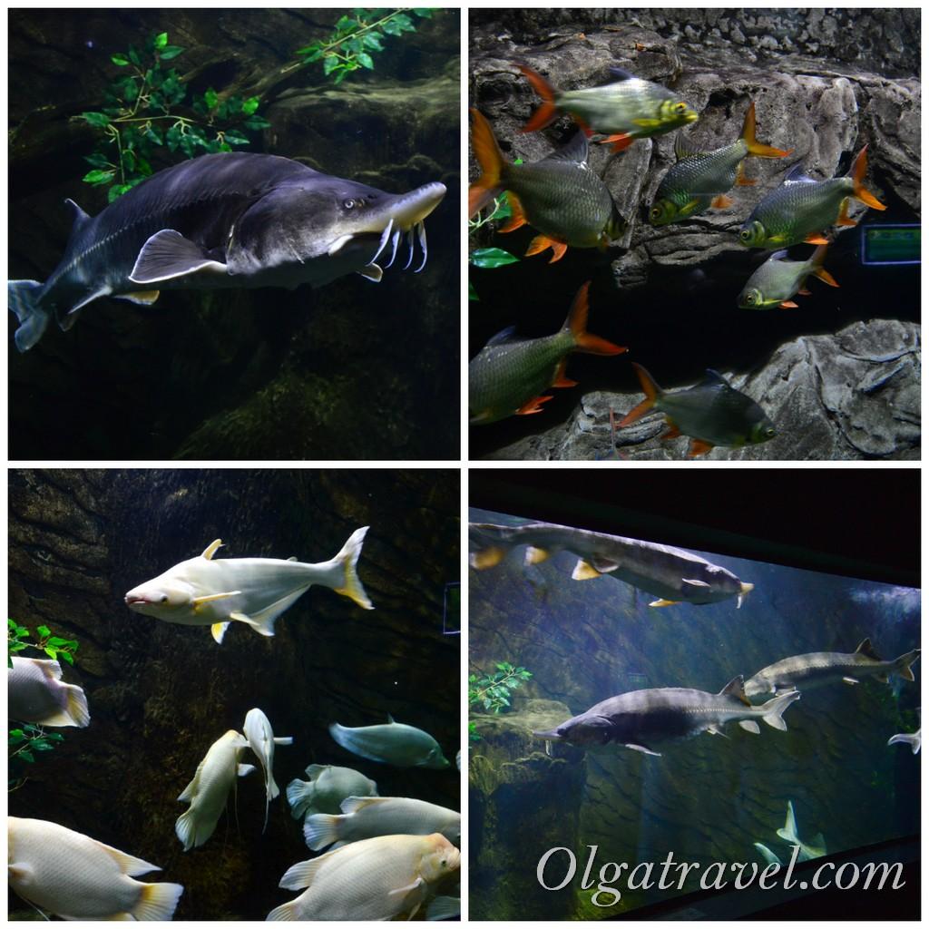 винперл фукуок аквариум