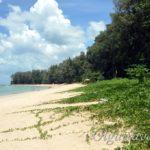 Пляж Най Янг на Пхукете – пляж для спокойного отдыха, пляж без волн