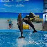 Дельфинарий на Пхукете: море позитива для детей и взрослых