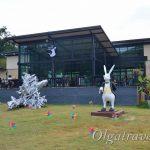 Куда сходить на Пхукете с детьми: кафе с кроликами на Пхукете