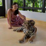 Тигры на Пхукете: новый Tiger Park Phuket или в клетке с тигром два