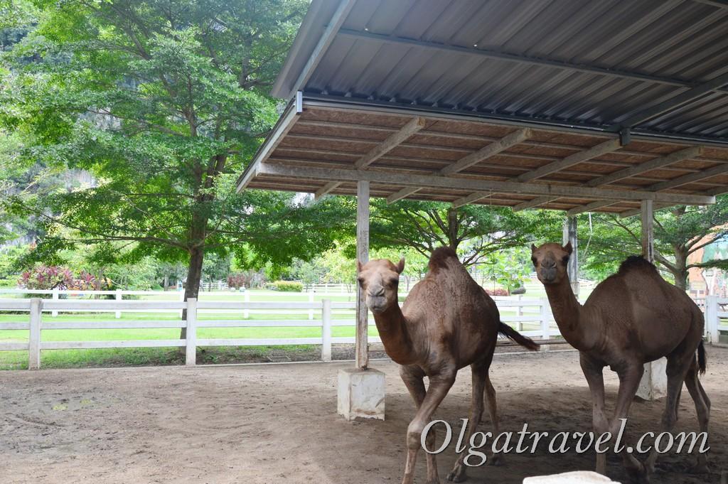контактный зоопарк ферма Пхукет