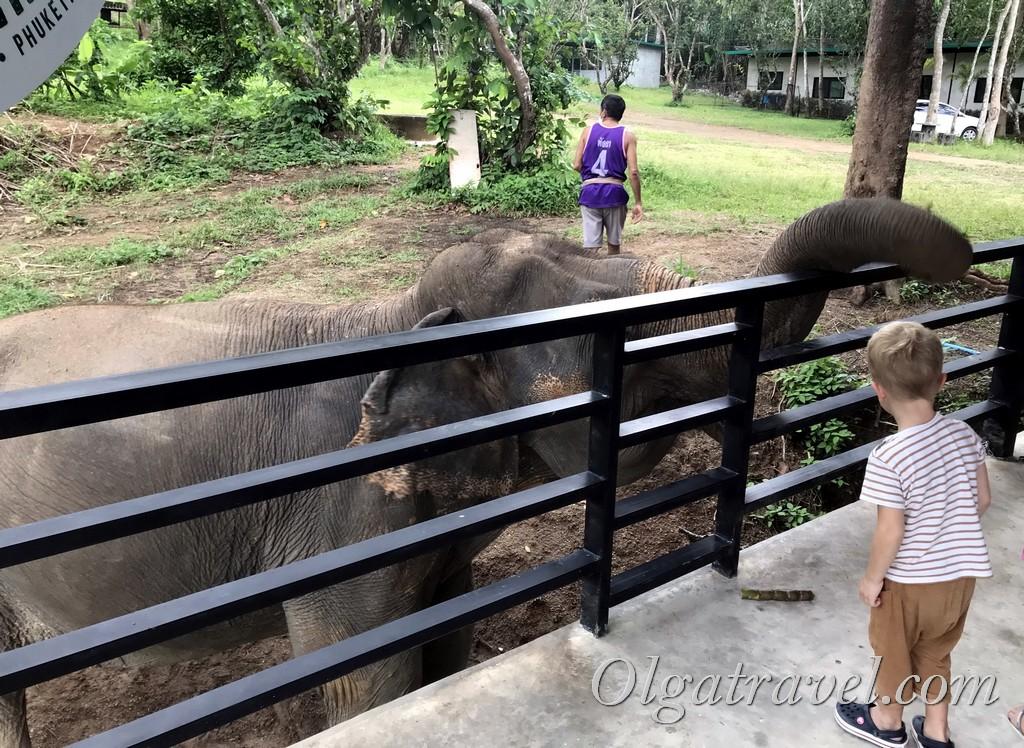 слоны Пхукет